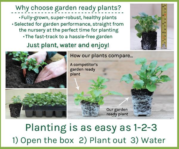Why choose garden ready plants?