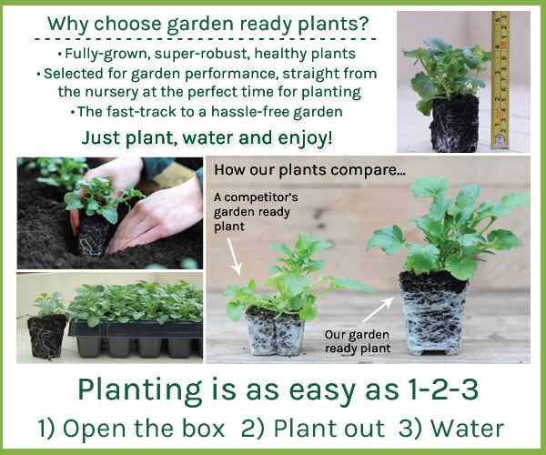Why choose garden ready plants?